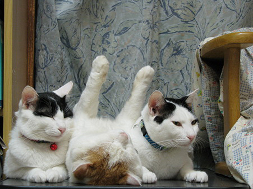cat-with-paws-in-air