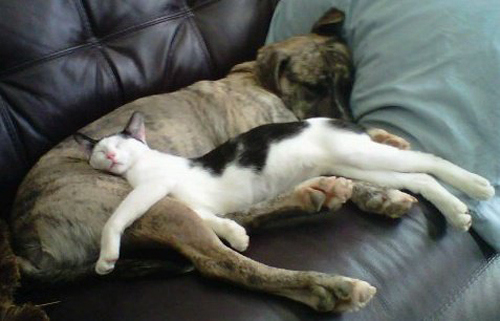 cat-sleeping-on-dog