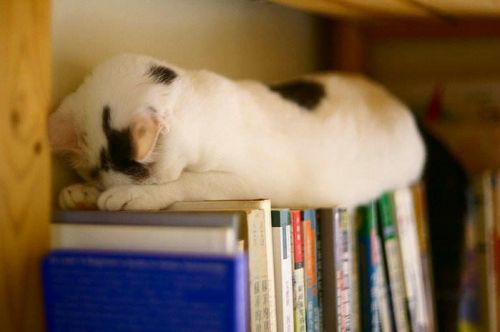 cat-and-books