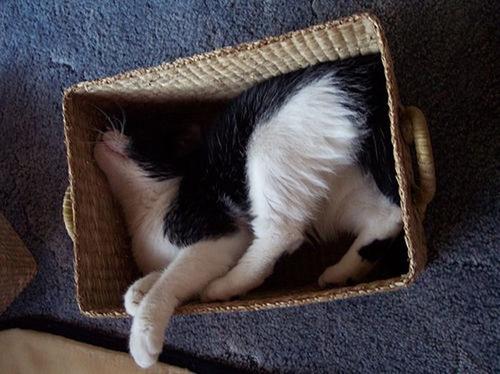 awkward-cat-in-box