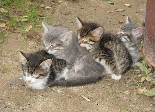 line-of-cats