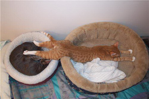cat-in-two-beds