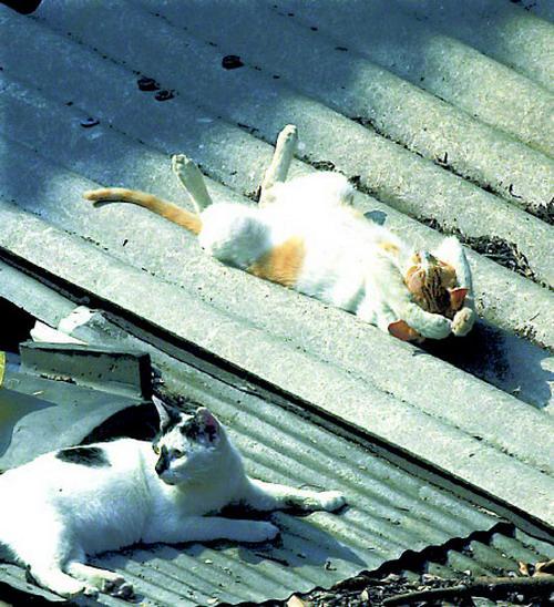 sun-bathing-cat