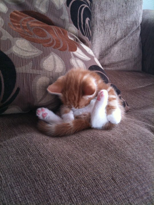 upward-sleeping-cat