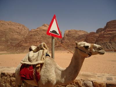 camel_parking