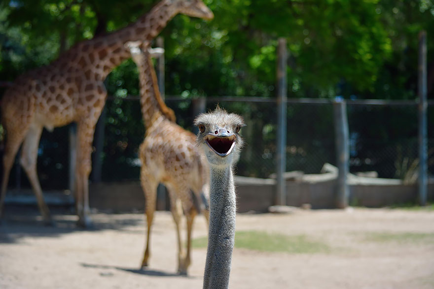 funny-animal-photobombs-6__880